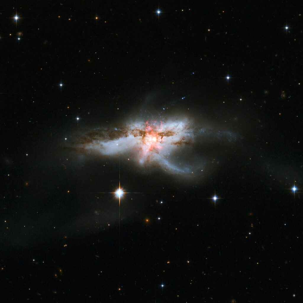 Not all galaxies are neatly shaped, as this new NASA/ESA Hubble Space Telescope image of NGC 6240 clearly demonstrates. Hubble previously released an image of this galaxy back in 2008, but the knotted region, shown here in a pinky-red hue at the centre of the galaxies, was only revealed in these observations from Hubble's Wide Field Camera 3 and Advanced Camera for Surveys. NGC 6240 lies 400 million light-years away in the constellation of Ophiuchus (The Serpent Holder). This galaxy has an elongated shape with branching wisps, loops and tails. This mess of gas, dust and stars bears more than a passing resemblance to a butterfly and, though perhaps less conventionally beautiful, a lobster. This bizarrely-shaped galaxy did not begin its life looking like this; its distorted appearance is a result of a galactic merger that occurred when two galaxies drifted too close to one another. This merger sparked bursts of new star formation and triggered many hot young stars to explode as supernovae. A new supernova was discovered in this galaxy in 2013, named SN 2013dc. It is not visible in this image, but its location is indicated here. At the centre of NGC 6240 an even more interesting phenomenon is taking place. When the two galaxies came together, their central black holes did so too. There are two supermassive black holes within this jumble, spiralling closer and closer to one another. They are currently only some 3000 light-years apart, incredibly close given that the galaxy itself spans 300 000 light-years. This proximity secures their fate as they are now too close to escape each other and will soon form a single immense black hole. Links  Images of Hubble
